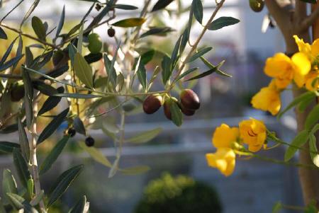 terrassenpflanzen berwintern vor frostgefahr. Black Bedroom Furniture Sets. Home Design Ideas